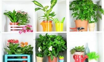 7 Кращих кімнатних рослин, яким не треба багато світла