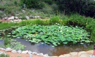 Чим небезпечна близькість ґрунтових вод