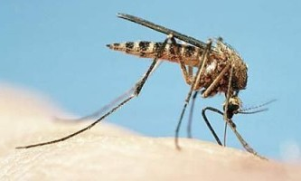 Чим зняти свербіж від укусу комарів у дорослих і дітей? Слушні поради