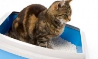 Що робити, якщо у кішки запор?