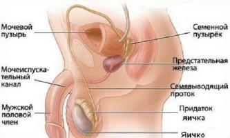 Що таке сперматорея?