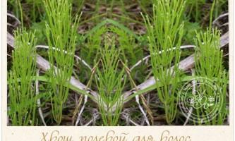 Хвощ полевой- диво-травичка для волосся. Властивості і застосування для зміцнення волосся