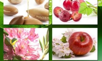 Інновації desheli: стовбурові клітини рослин