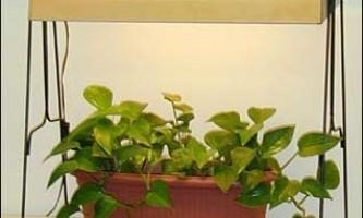 Штучне освітлення рослин