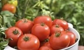 """Як вирощувати помідори сорту """"бичаче серце"""""""