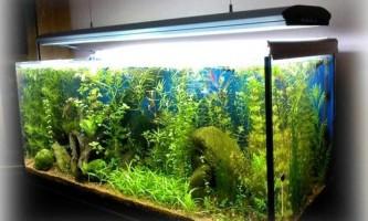 До чого сниться акваріум з красивими рибками: тлумачення снів сонник миллера, фрейда і іншими