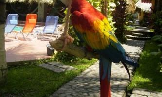 Як швидко навчити папугу розмовляти