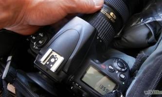 Як фотографувати домашніх вихованців