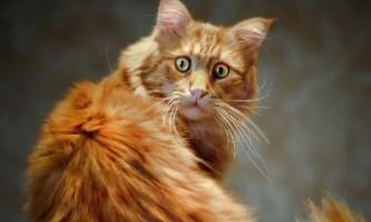 Як позбавити кота від сильного стресу