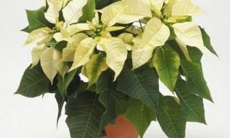 Як позбутися від мошок в кімнатних рослинах