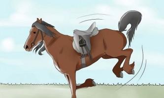 Як відучити кінь брикатися