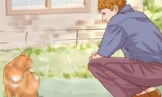 Як спіймати бездомного кота