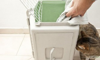 Як посадити кішку в клітку переноску
