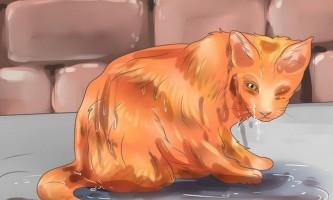 Як приручити дикого кота