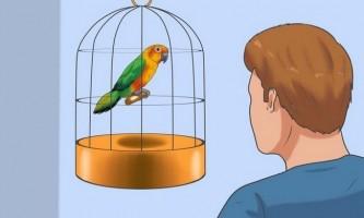 Як приручити птаха