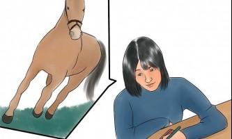 Як призвести кінь в форму