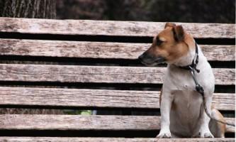 Як впоратися з делікатною проблемою у собаки - лікуємо запор