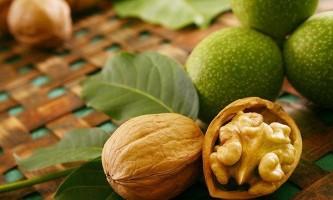 Як вживати волоські горіхи від хвороби