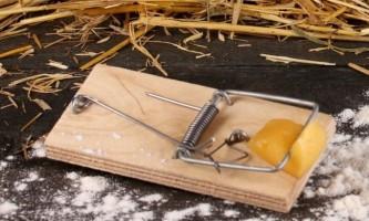 Як захистити зимовий сад від гризунів