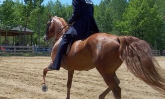 Як змусити кінь перейти на більш швидкий алюр