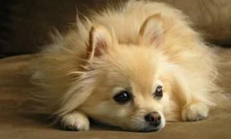 Які ознаки позбавляючи у собак