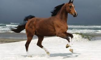 Якого коня називають гнідим