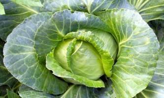 Капустяна дієта - мінус 5-10 кілограм за тиждень!