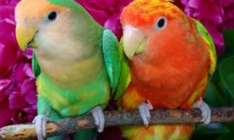 Класифікація папуг: види, фото і назви