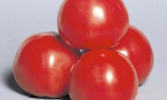 Великі томати космонавт вовків