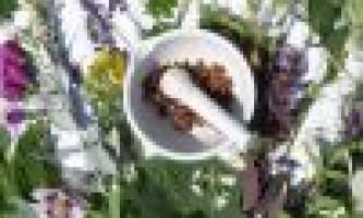 Лікувальні рослини: мудрість століть на службі медицини