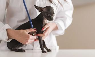 Лікування пухлини у собаки