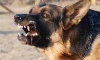Лікування укусу собаки шерстю