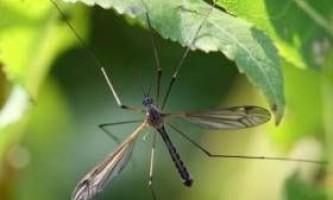 Малярія знову в європі