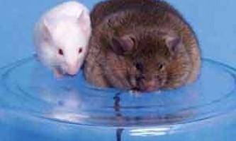 Знайдений ген, що захищає від ожиріння