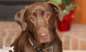 Пухлини ендокринних залоз у собак