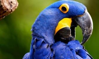 Від малого до великого - розглядаємо породи папуг