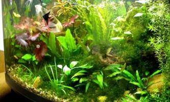 Чому не ростуть рослини в акваіуме