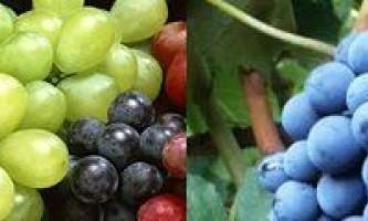 Користь і шкода кишмишу (винограду) для здоров`я людини і способи його зберігання і заморозки