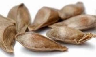 Допомога щитовидній залозі при гіпотиреозі
