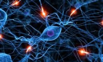 """Пошкоджений спинний мозок можна """"склеїти"""" стовбуровими клітинами"""