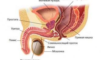 Чому з`являються тріщини в паху у чоловіків і як їх лікувати?
