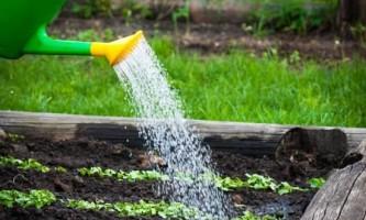 Як найкраще організувати полив кімнатних рослин