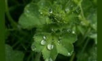 Рослини для схуднення