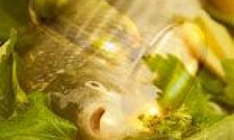 Риб`ячий жир: склад, властивості і користь, показання та протипоказання до застосування риб`ячого жиру