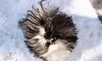 Серотоніновий синдром у собак