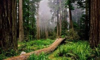 Сонник: до чого сниться ліс