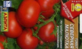 Сорт томата: північна красуня