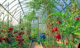 Спільні посадки в теплиці, або які овочі можна садити поруч