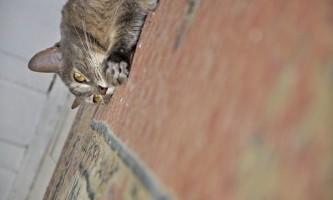 Стерилізація кішок: причини, способи і наслідки