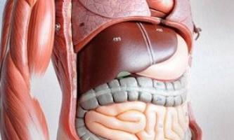 Трансплантація штучної печінки скоро стане реальністю